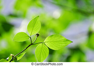 close up on green leaves
