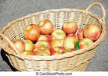 close up on honey crispy apples in the basket