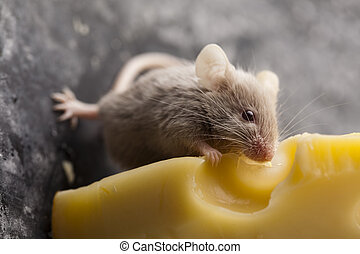 Close up on little mouse