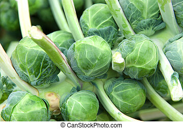 Close up on pile of brussel sprouts still on the stalk