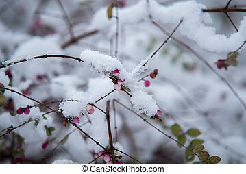 close up on plant with snow