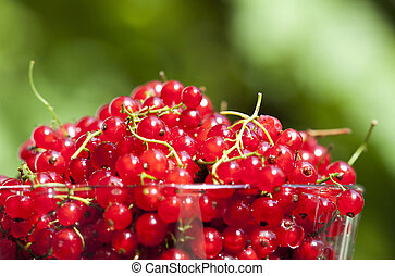 Close up on red currants in a bowl
