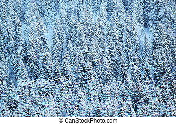 Close up on winter fir trees woods