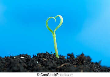 Close-up on young seedling growing out of soil - Close-up on...