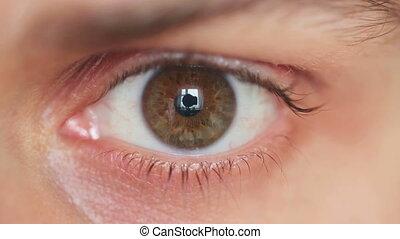 close-up, oog