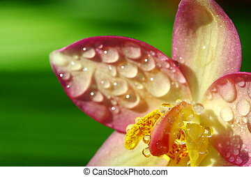 close up orchid in garden, colorful flower