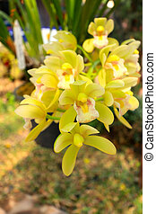 Close up orchid in nature