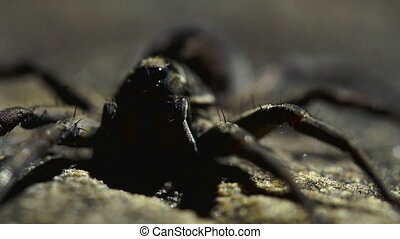 Close up pan shot of arachnid in enclosure - A close up,...