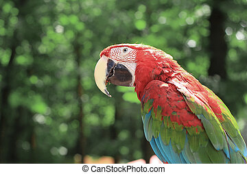 close up. parrot macaw sitting on a branch