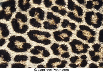 Leopard - Close up pattern of Leopard Skin