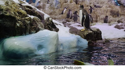Close-up Penguin. Funny Male and Female Birdes in zoo