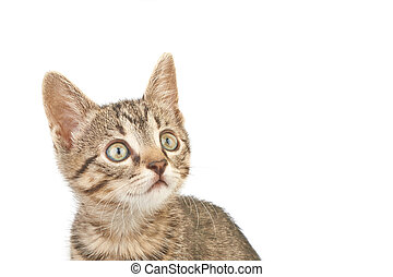 Close-up photo of a brown striped kitten looking up,