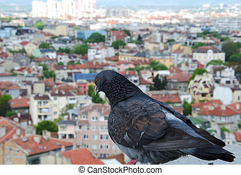 Close up photo of a dove on the roof