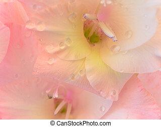 close up photo of pink gladiolus