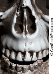 Close-up photo of the human skull