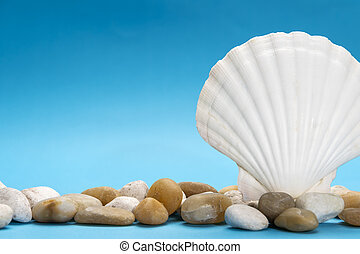 Close up photo of white shell and stones
