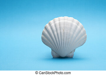 Close up photo of white shell on blue background