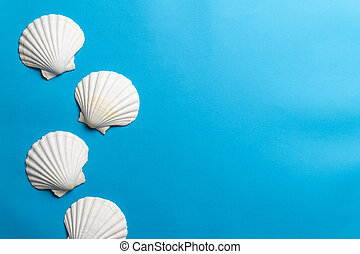 Close up photo of white shells with copy space