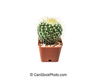 Close-up photos of small cactus isolated on a white background