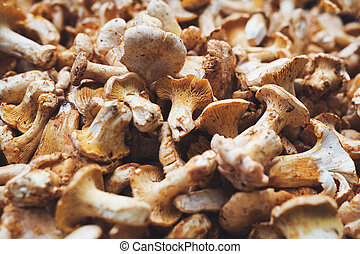 Close up picture of forest mushroom boletus