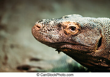 Close-up picture of lizard standing calmly in nature