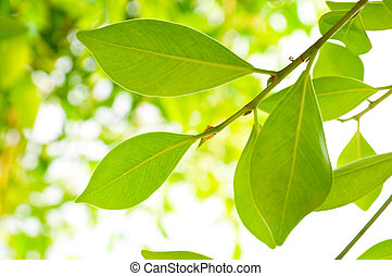 close up picture of rich tree foliage