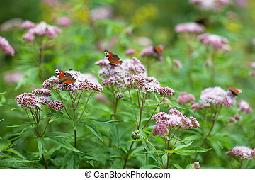 Close up picture of several butterflies in a beautiful blooming