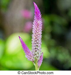 close up pink color of stalk flower - flowering purple...