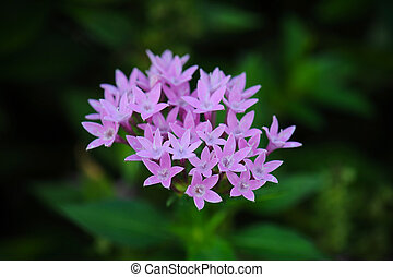 Close up pink flower in garden
