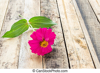 Close up pink flower on wooden table