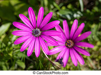 close up pink flowers