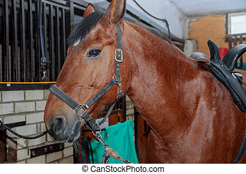 Close up portrait of a beautiful horse in a stable.