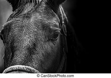 close-up portrait of a horse in black and white