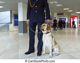 Close up portrait of a Labrador dog for detecting drugs at the airport standing near the customs guard.