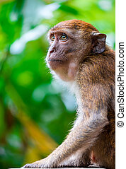 close-up portrait of a monkey in the park outdoors