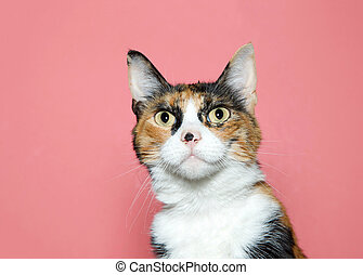 portrait of a surprised calico cat