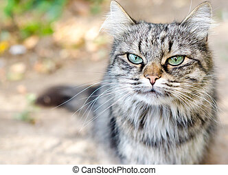 close-up portrait of a tabby cat with a very displeased face