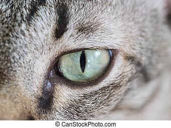close-up portrait of cat eyes.