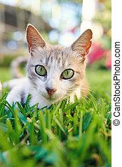 Close up portrait of cat