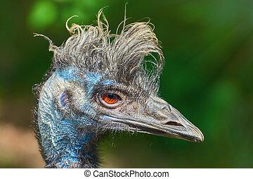 Close up Portrait of Emu