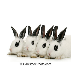 close up portrait of four cute bunnies on white background