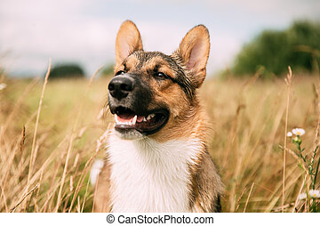 Close Up Portrait Of Funny Mixed Breed Dog. Dog Sitting In Summer Dry Grass
