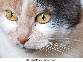 Close up portrait of grey kitten with beautiful eyes