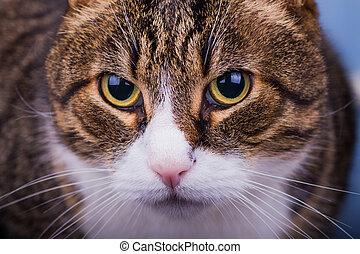 Close-up portrait of home cat