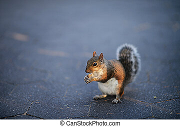 Close-up portrait of squirrel on the ground
