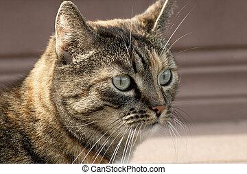 Close-up portrait of striped cat