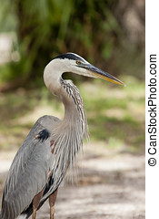 Close up profile of heron.