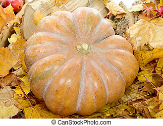 close up pumpkin with autumn leaves