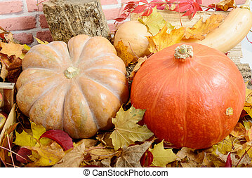 close up pumpkins with autumn leaves