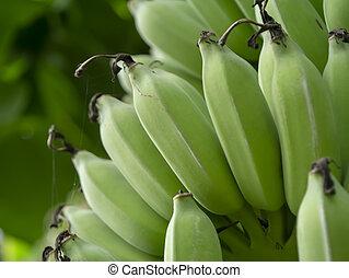 Close up raw banana
